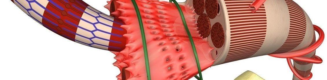 Die Faszien oder auch Muskelhaut genannt durchziehen den ganzen Körper und bilden dadurch eine Art Spannungsnetzwerk welches jeden Muskel umhüllt. Verkürzte oder verklebte Faszien führen zu Spannungen im Körper bzw. können Druck auf Nerven ausüben, welche dann zu Schmerzen auslösen.