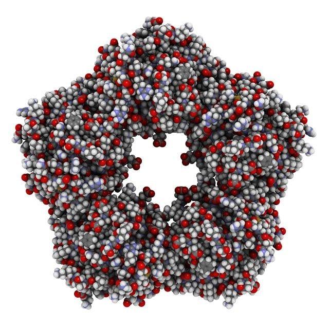 Das sich in der Leber bildende C-reaktive Protein (CRP) ist ein Eiweißkomplex. Es Teil der Immunabwehr und wird als Reaktion auf eine Entzündung oder einen Tumor produziert.