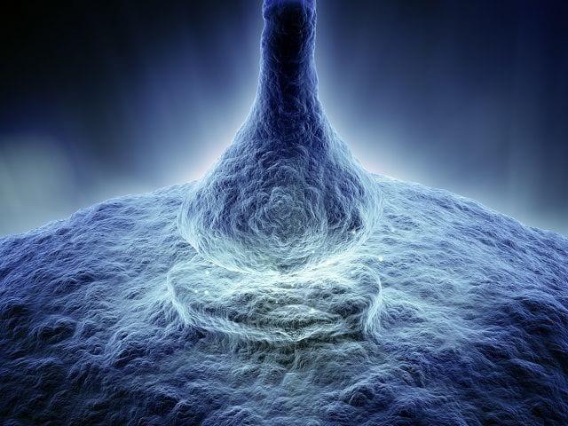 Schädigungen des menschlichen Gewebes in Form von Hitze, Säure, Kälte und mechanische Einwirkungen werden durch sogenannte Nozirezeptoren registriert.