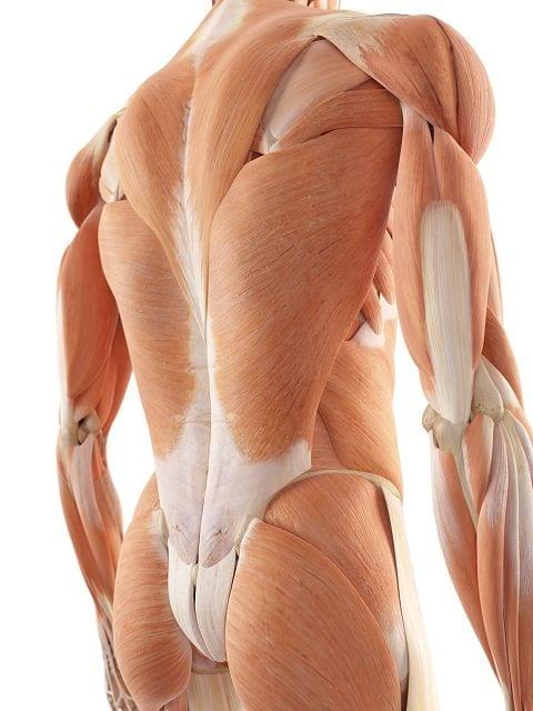 Muskelverspannungen sind der häufigste Grund und werden den unspezifischen Rückenschmerzen zugeordnet. Aus medizinischer Sicht werden sie der myofaszialen Schmerzentstehung zugeordnet.