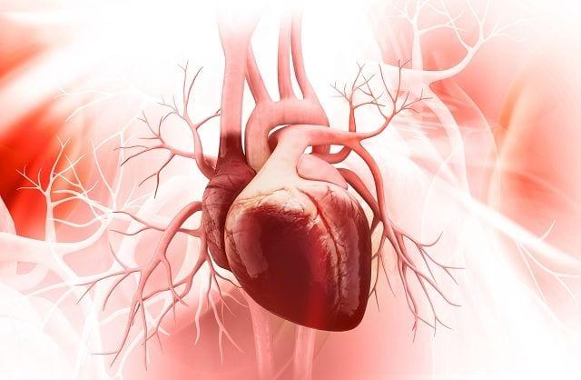 Der Herzbeutel ist eine Faszie welche das Herz schützt und ihm eine gewisse Bewegungsfreiheit erlaubt.