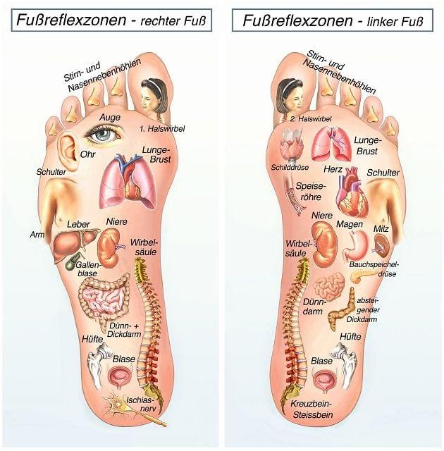 Die Head´schen Zonen wurden vom Neurologen Dr. Sir Henry Head entdeckt und beschreiben eine Verbindung zwischen bestimmten Hautflächen und definierten Organen. Die wichtigsten Hautareale befinden sich dabei am Oberkörper, Rücken, Schulter und Lende. Daraus ist die sogenannte Reflexzonenmassage entstanden, die diese Hautbereiche und deren Organe stimuliert.