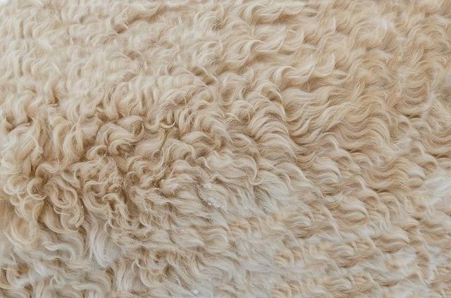 Bettausstattung aus Schafschurwolle wirkt schmerzlindernd und verbessert die Schlafqualität.
