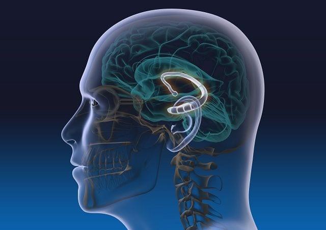 Der Hippocampus ist Teil des Gehirns (limbisches System) und ist die Schaltstelle zwischen Kurz- und Langzeitgedächtnis