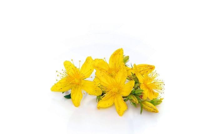 Johanniskraut wirkt stimmungsaufhellend und kann bei leichten bis mittleren Depressionen eingenommen werden.