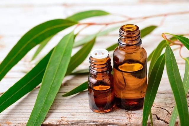 Eukalyptusöl wird mittels Wasserdampfdestillation der Blätter und Zweige gewonnen.