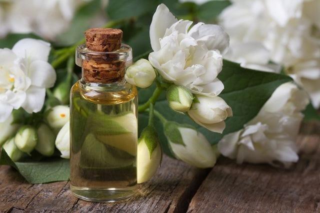 Jasminöl wiird mittels Lösungsmittelextraktion aus den Blüten gewonnen
