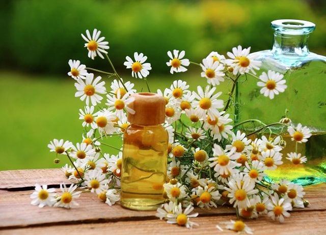 Kamillenöl wird mittels Wasserdampfdestillation aus den Blütenköpfen hergestellt.
