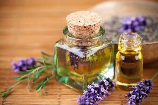 Lavendel gehört zu Gattung der Lippenblütler und ist in der Aromatherapie sehr beliebt und verbreitet.