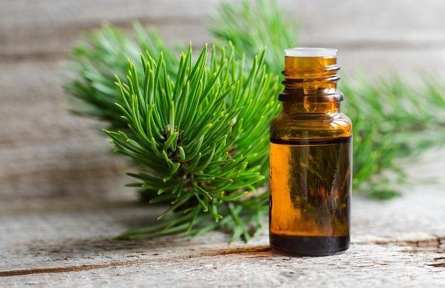 Das Tannenzapfenöl wird durch Destillation der Zapfen gewonnen und hauptsächlich bei Erkältungskrankheiten eingesetzt.